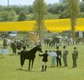 pferdeausbildung_bild